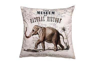 Tyynynpäällinen Elephas