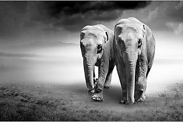 Canvas Elephant 80x120 cm