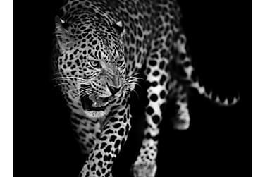 Canvas Leopard 70x100 cm