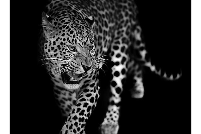 Canvas Leopard 70x100 cm - Art Link - Sisustustuotteet - Seinäkoristeet - Canvas-taulut