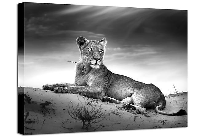 Taulu Canvas Lioness - 75x100 - Sisustustuotteet - Seinäkoristeet - Canvas-taulut