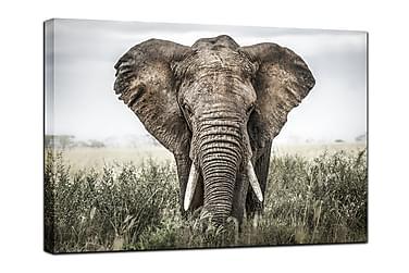 Taulu Elephant in grass