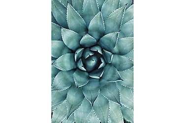 Juliste Green Cactus