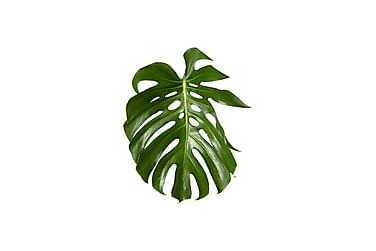 Juliste Green Monstera