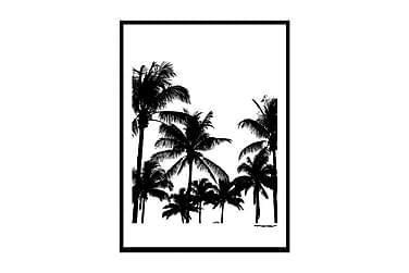Juliste Miami palms