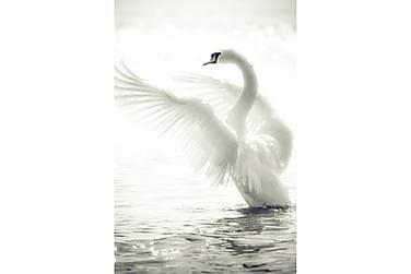 Juliste Swan