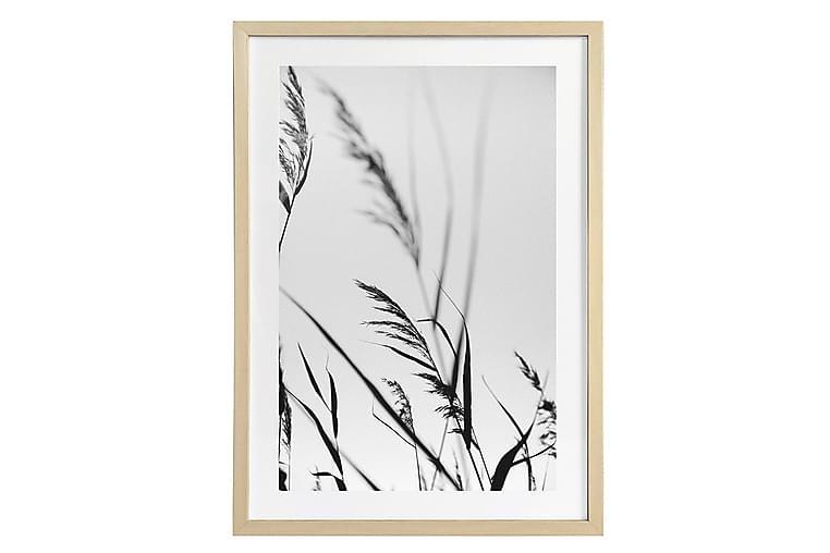 Taulu Deco Grass 2 50x70 cm - AmandaB - Sisustustuotteet - Seinäkoristeet - Kehykset