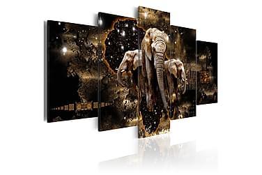 Taulu Brown Elephants 200x100