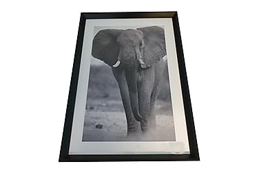 Taulu Elephant M/V Passepartout Musta Kehys 50x3,5x70 cm