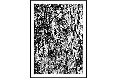 Taulu Puu 50x70 cm