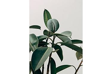 Juliste Green Plant