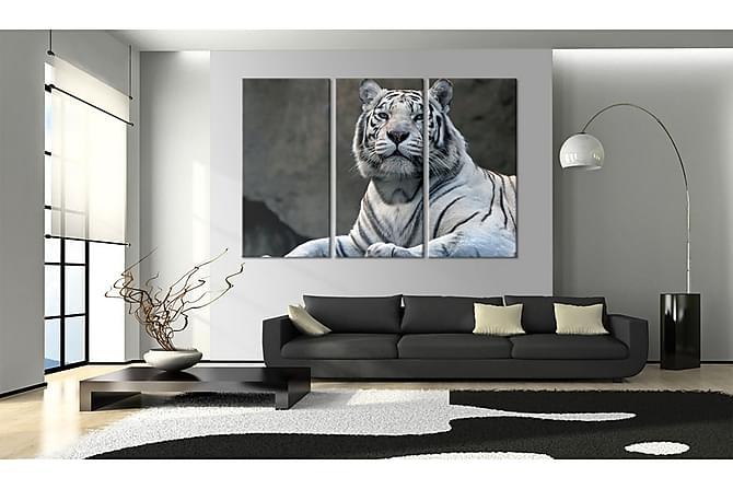 Taulu White Tiger 120x80 - Saatavana usean kokoisena - Sisustustuotteet - Seinäkoristeet - Taulut & taide