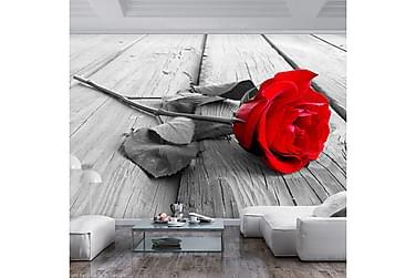 Valokuvatapetti Abandoned Rose 300x210