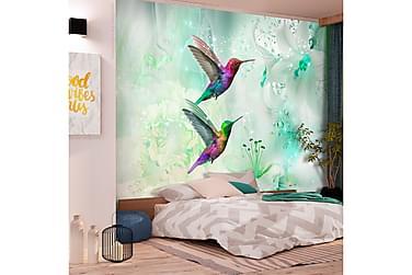 Valokuvatapetti Colourful Hummingbirds Green 100x70