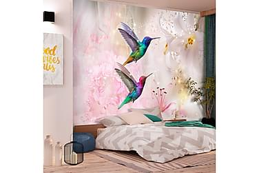 Valokuvatapetti Colourful Hummingbirds Pink 150x105