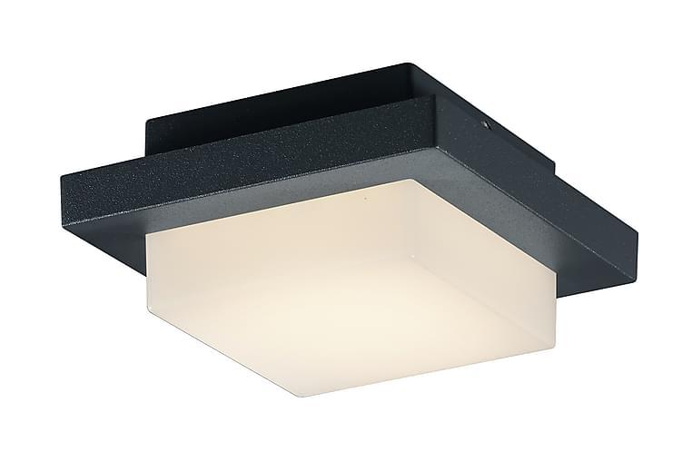 LED-Katto/Seinävalaisin Hondo 3,5W Musta - TRIO - Valaistus - Sisävalaistus & lamput - Seinävalaisimet